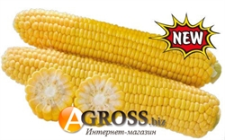 Семена кукурузы 1708 F1  2500 шт - фото 7740