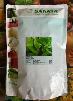 Семена шпината Аполло F1 - фото 7880