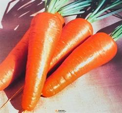 Семена моркови  Ред Коред (Ларк Сидз) - фото 7886
