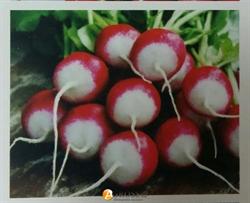 Семена редиса Полонеза (1 кг) - фото 7994