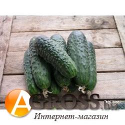 Семена огурца Платина F1 1000 шт - фото 8050