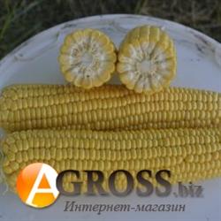 Семена кукурузы Джамала F1 1000шт. - фото 8136