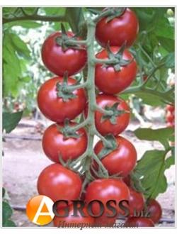 Семена коктейльного томата Арома F1 100  шт - фото 8168