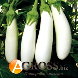 Семена баклажана Моби Дик (белый) F1 - фото 8199