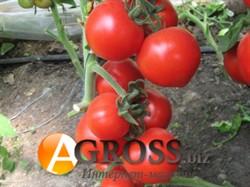 Семена томата Хитомакс F1 100 шт АКЦИЯ - фото 8347