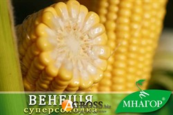 Семена кукурузы Венеция F1 1000 шт. - фото 8381