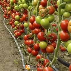 Семена томата Барибин F1 500 шт - фото 8394