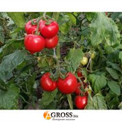 Семена томата Мелонет F1 500 шт. - фото 8432