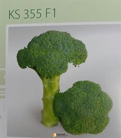 Семена капусты брокколи KS 355 F1 (1000 шт) - фото 8776