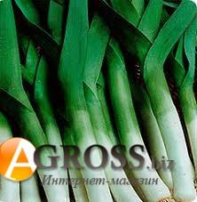 Семена лука - порей Криптон F1 (10 000 шт) - фото 8805