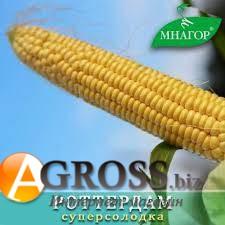 Семена кукурузы Роттердам F1 1000 шт - фото 8821