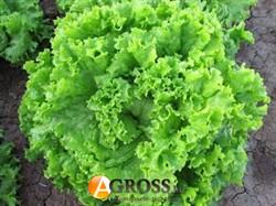Семена салата Канкан 5г - фото 8843