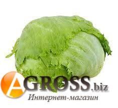 Семена салата Гондар (тип Айсберг) 5000 шт - фото 8858