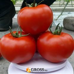 Семена томата Прайд F1 - фото 8869