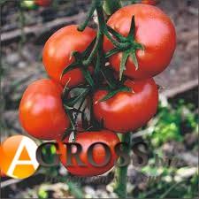 Семена томата Целестин F1 - фото 8872