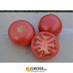 Семена томата 1810 F1 - фото 8913