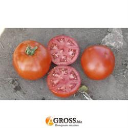 Семена томата 1502 F1 - фото 8921