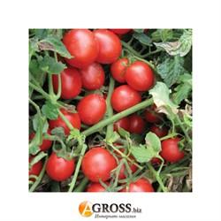 Семена томата Шкипер F1 - фото 8927