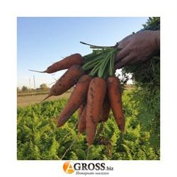 Семена моркови Йорк F1 (калибр. 1,8 - 2,0) - фото 8945