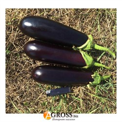 Семена баклажана Миринда F1 - фото 8952