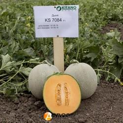 Семена дыни KS 7084 F1 - фото 9013