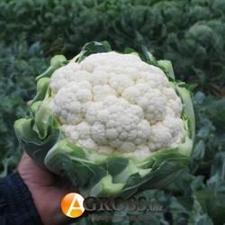 Семена капусты цветной Фарго F1 2500 шт - фото 9019