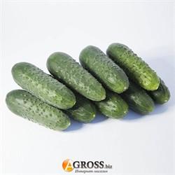 Семена огурца KS 70 F1 - фото 9073