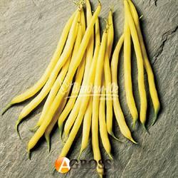 Семена спаржевой фасоли Фруидор - фото 9135