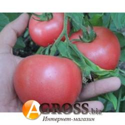Семена томата BT Пембола F1 - фото 9201