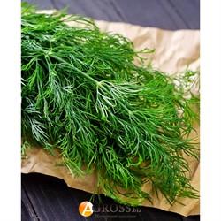 Семена укропа Мега Тетра (Денди) - фото 9274