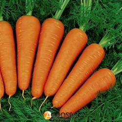 Семена моркови Ред Кор 500 г - фото 9282
