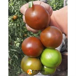 Семена темно - коричневого томата Силиври F1 - фото 9287