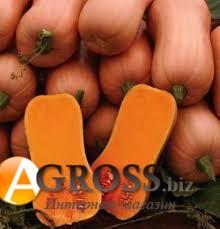 Семена тыквы Ариель F1 - фото 9302