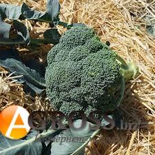 Семена капусты брокколи Нексос F1 - фото 9320