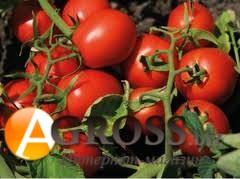 Семена томата N 6438 F1 - фото 9409