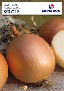 Семена лука Колос F1 - фото 9419