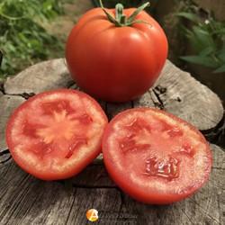 Семена томата Картье F1 - фото 9639