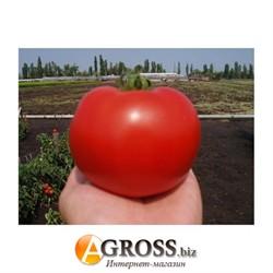 Семена томата Акела F1 - фото 9765