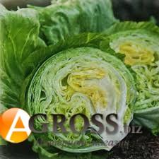 Семена салата Висмар - фото 9778