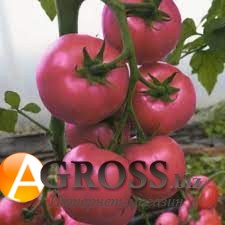 Семена томата Сиберите 916 F1 - фото 9843