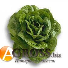 Семена салата Клаудиос тип Ромен - фото 9852