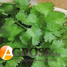 Семена кориандра Сноуболт - фото 9874