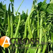 Семена фасоли спаржевой Палома - фото 9888