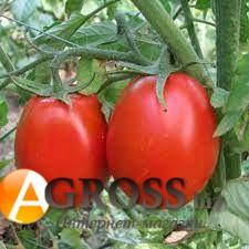 Семена томата №6416 F1 - фото 9895