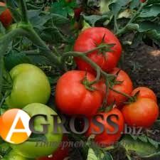 Семена томата Зорина F1 - фото 9929