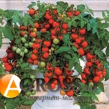 Семена томата черри Баяя - фото 9980