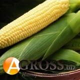 Семена кукурузы Бостон F1 100 000 шт