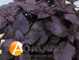 Базилик фиолетовый Этруск