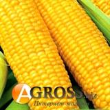 Семена кукурузы  Мегатон F1 4000 шт