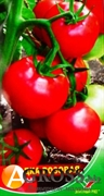 Семена томата Загадка розовая 1 г